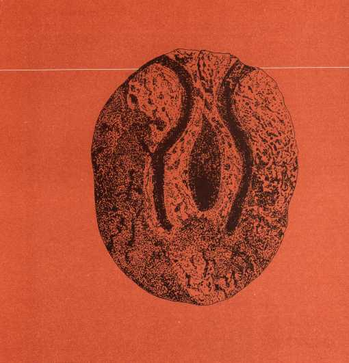 1 vulva Lepenski Vir, Danubio 6000 a.C.